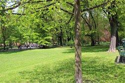Bednarski Park