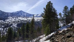 Mountain Borus