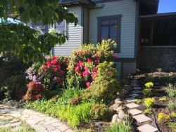Spring blooms in Ellen's garden.