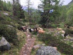 Escursione al Rifugio Canziani al Lago Verde
