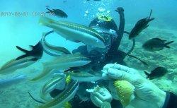 Crete Underwater Dive Center