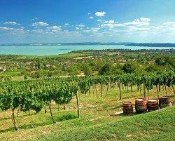 vineyard at Lake Balaton