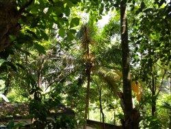 Highland Spice Garden