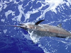 Capt. Jack - Kona Sportfishing