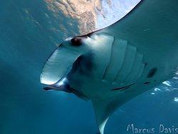 Indo Divers Lembongan