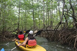 Mangrove Monkey Land & Rafting