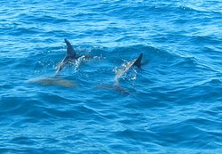 Our dolphins that come and play