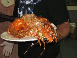Best seafood to be had