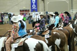 Pinto Horse Championship (260189337)