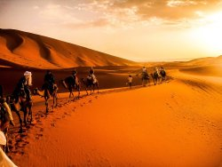Amazing Camel Tours