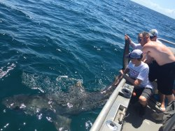 Sanibel Offshore Fishing Charters