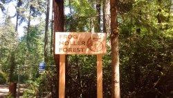 Frog Holler Forest