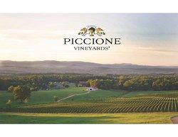Piccione Vineyards