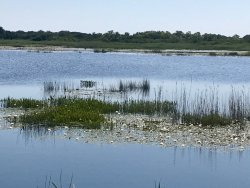 Back Bay National Wildlife Refuge
