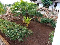 Kendwa Royal Palm