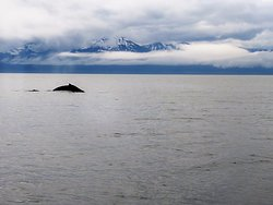 Whale Watching and Wildlife Quest