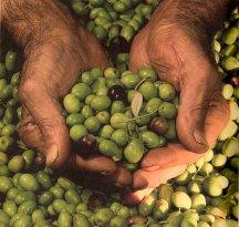Veronesi - Frantoio per Olive dal 1918