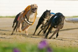 Manchester Greyhound Stadium Belle Vue