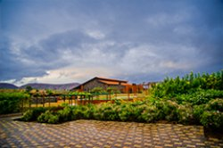 Grape County Eco Resorts