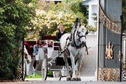 Tally-Ho Carriage Tours