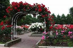 Togashi Rose Garden