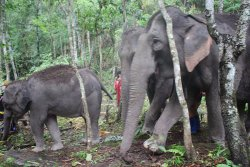 Doiinthanon Elephant Park