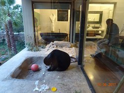 Yes! That sun bear is literally at the foot of our bed! (albeit behind glass)