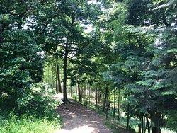 仙元山公園