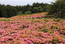 Hoshigayama Park Satsuki no sato