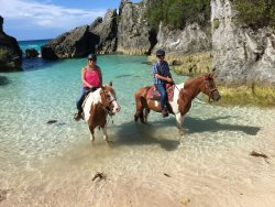 ‪Bermuda's Best Horse Trail Rides and Horses‬