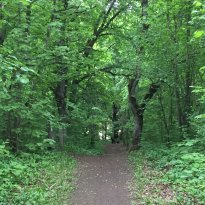 Rakvere Oak Grove Hiking Trail