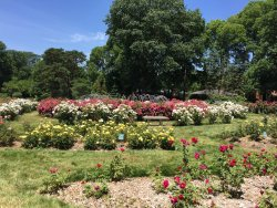 ‪Whetstone Park / Park of Roses‬
