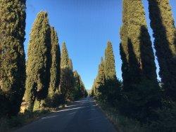 Viale dei Cipressi