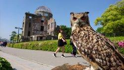 Owl de Base