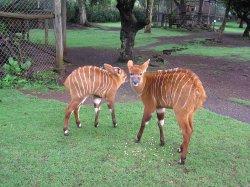 Mount Kenya Wildlife Conservancy