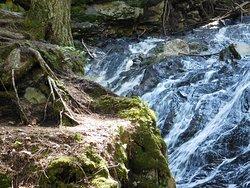 Thundering Falls Trail