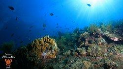 Atlantis International Bali