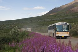 Denali National Park Bus Tours