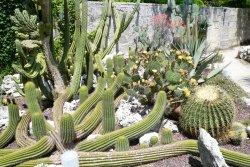La Cutura Giardino botanico