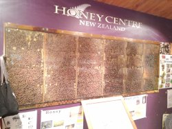 Honey Centre