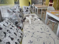 Bialy Kot (White Cat) Cat Cafe