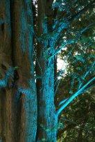 Beleuchtete Bäume außerhalb des Parks