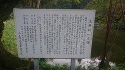 15.09【浅井の一本桜】説明板