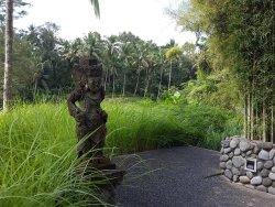 Peaceful rejuvenation retreat