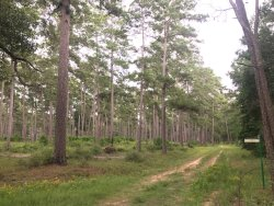 W. G. Jones State Forest