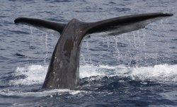 Dive Azores