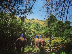 Elephants' Home & Nature