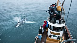 Whale Watching Hjalteyri