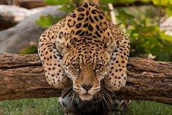 Zoologico de Quito