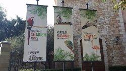 Flamingo Cafe Bird Gardens Monte Casino